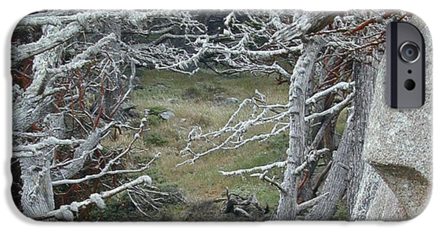 Lichens IPhone 6s Case featuring the photograph Ghost Trees by Douglas Barnett