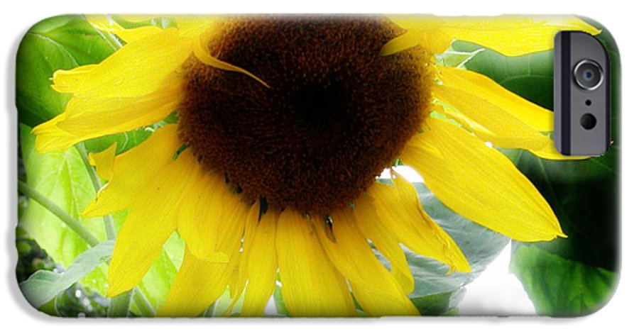Sunflower IPhone 6s Case featuring the photograph Golden Beauty by Idaho Scenic Images Linda Lantzy