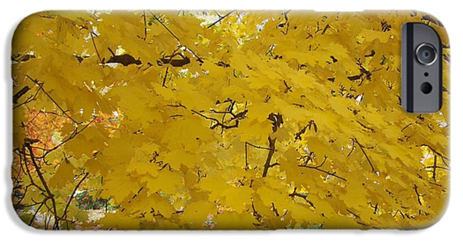 Fall Autum Trees Maple Yellow IPhone 6s Case featuring the photograph Golden Canopy by Karin Dawn Kelshall- Best