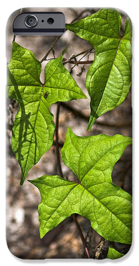 Green IPhone 6s Case featuring the photograph Green Arrowheads by Christopher Holmes