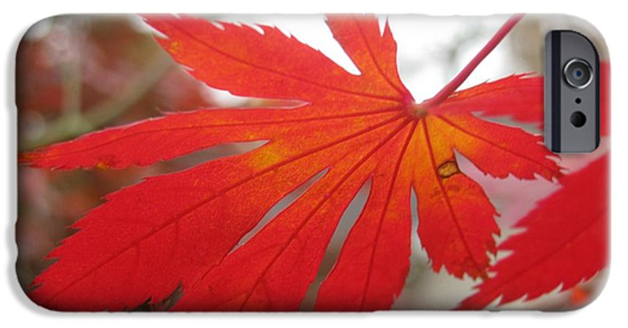 Maple IPhone 6s Case featuring the photograph Japanese Maple Leaf 1 by Jeffrey Todd Moore