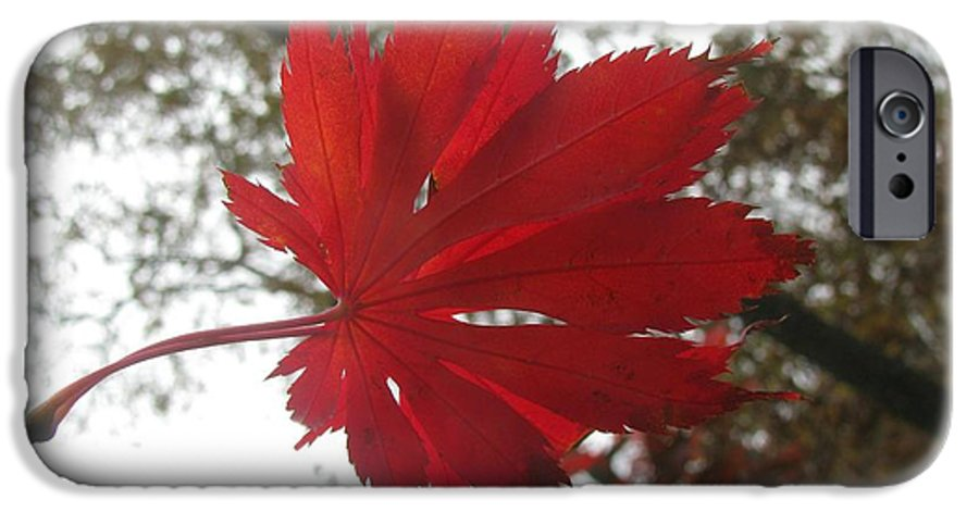 Maple IPhone 6s Case featuring the photograph Japanese Maple Leaf 2 by Jeffrey Todd Moore