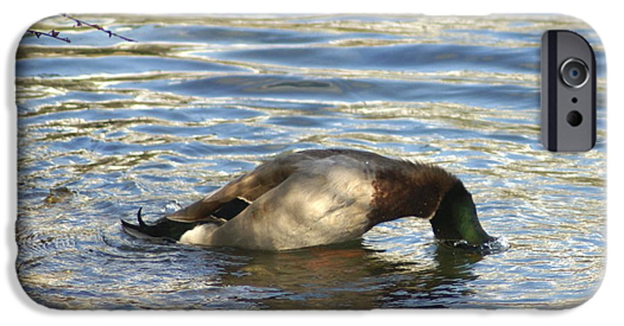 Duck IPhone 6s Case featuring the photograph Just One More Peek by Debbie May