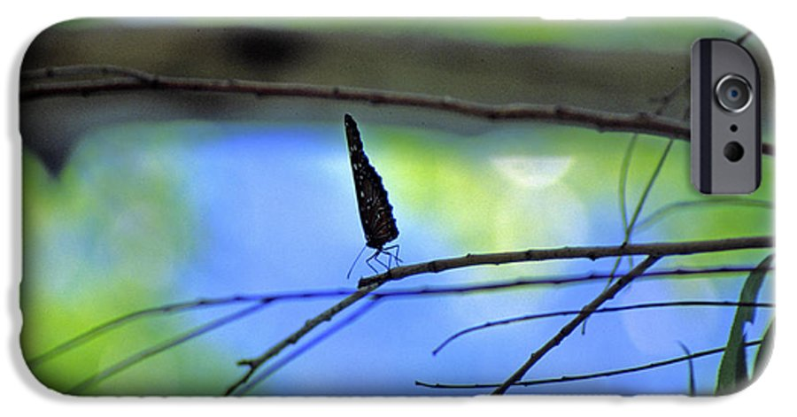 Butterfly IPhone 6s Case featuring the photograph Life On The Edge by Randy Oberg