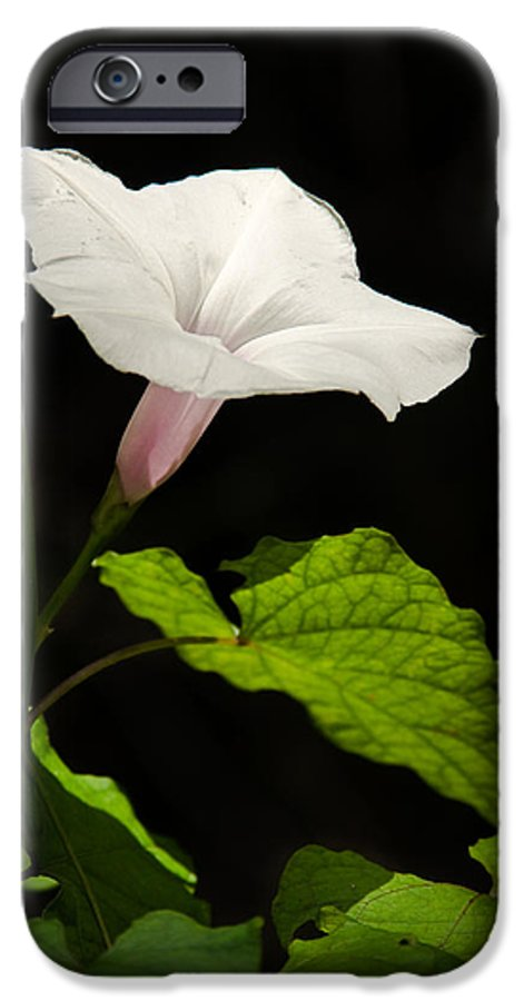 Flower IPhone 6s Case featuring the photograph Light Out Of The Dark by Christopher Holmes