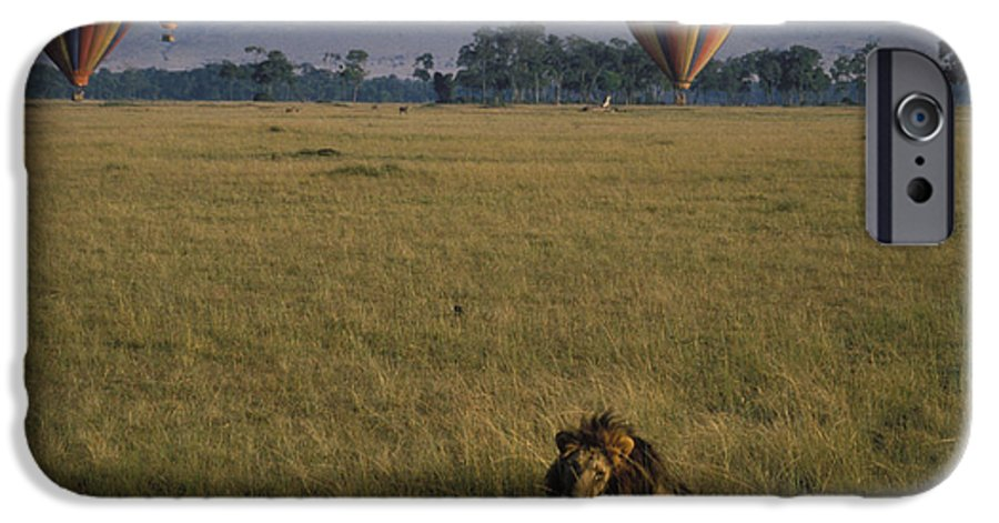Lion IPhone 6s Case featuring the photograph Lion Ignores Balloons by Carl Purcell