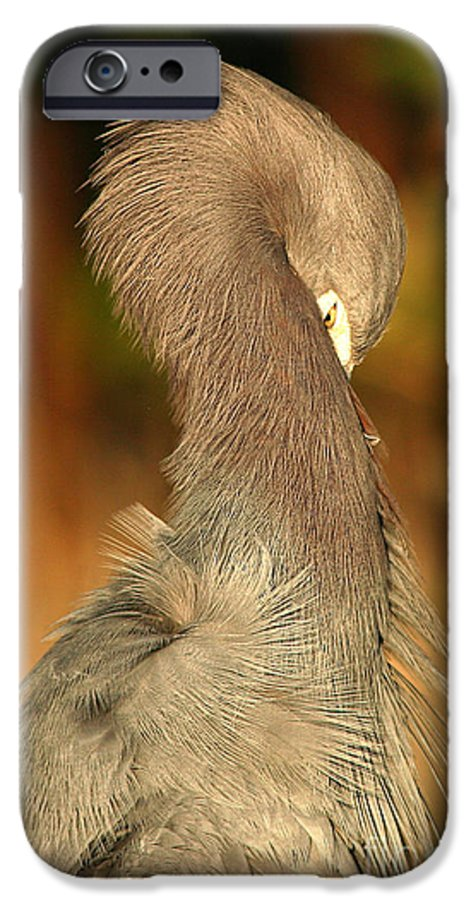 Heron IPhone 6s Case featuring the photograph Little Blue Heron Feeling Bashful by Max Allen