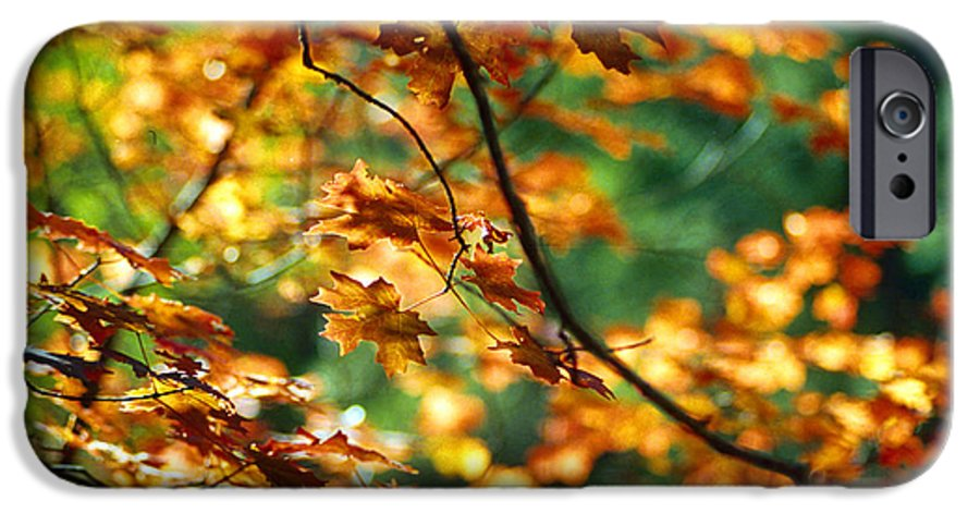 Fall Color IPhone 6s Case featuring the photograph Lost In Leaves by Kathy McClure