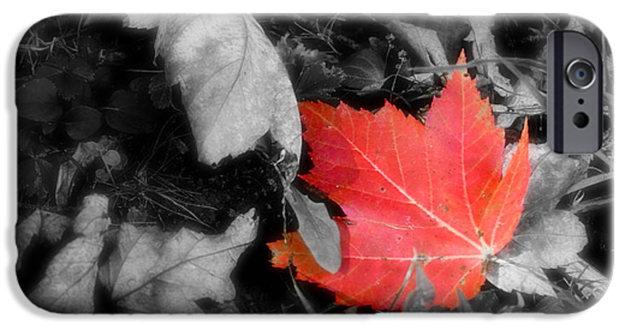 Leaf IPhone 6s Case featuring the photograph One Of A Kind by Kenneth Krolikowski