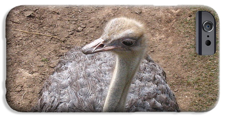 Ostrich IPhone 6s Case featuring the photograph Ostrich by Melissa Parks