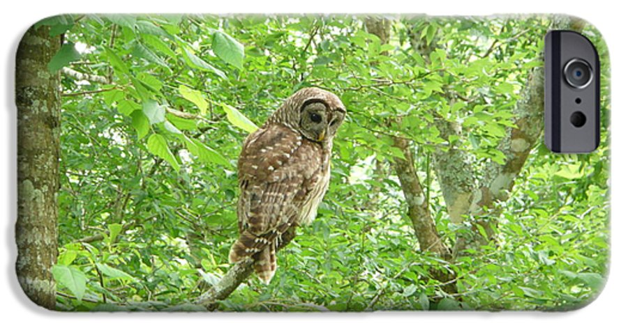 Owl IPhone 6s Case featuring the photograph Owl II by Kathy Schumann