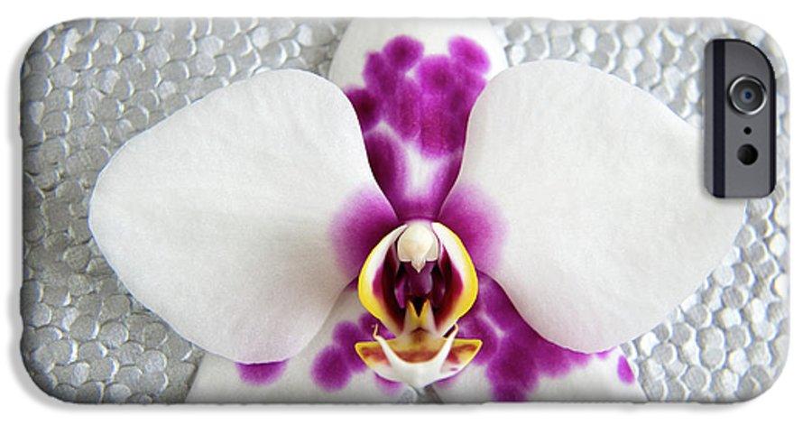 Nature IPhone 6s Case featuring the photograph Phalaenopsis Yu Pin Panda by Julia Hiebaum