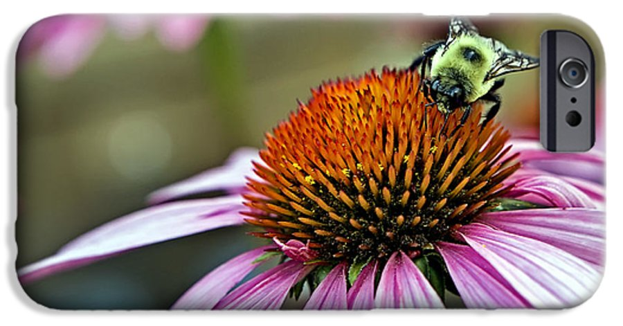 Macro IPhone 6s Case featuring the photograph Purple Cone Flower And Bee by Al Mueller