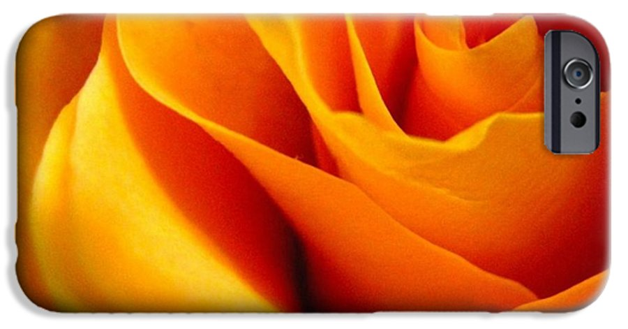 Rose IPhone 6s Case featuring the photograph Queen Rose by Rhonda Barrett