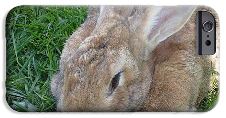 Rabbit IPhone 6s Case featuring the photograph Rabbit Head On by Melissa Parks