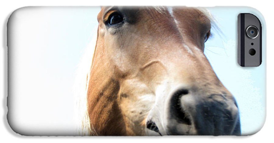 Horse IPhone 6s Case featuring the photograph Really by Amanda Barcon