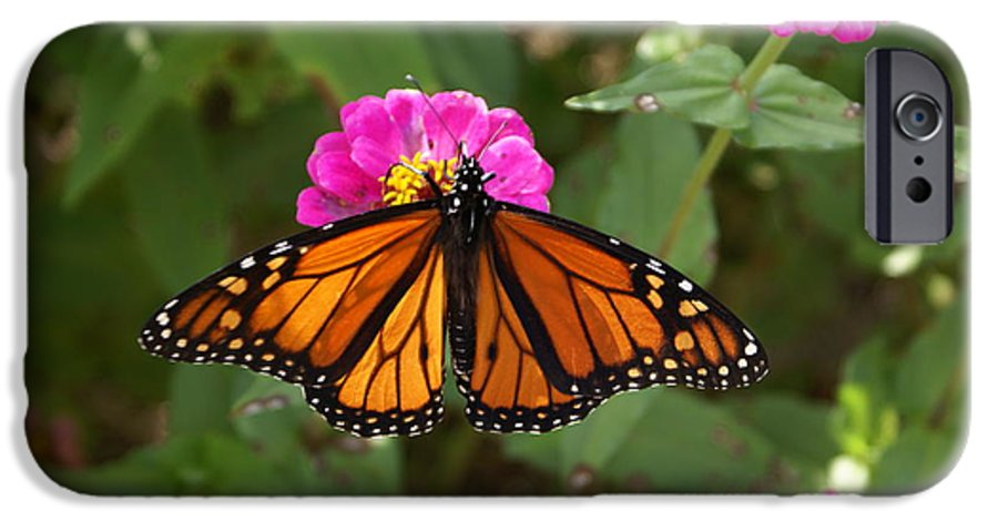 Butterfly IPhone 6s Case featuring the painting Resting by Debbie May
