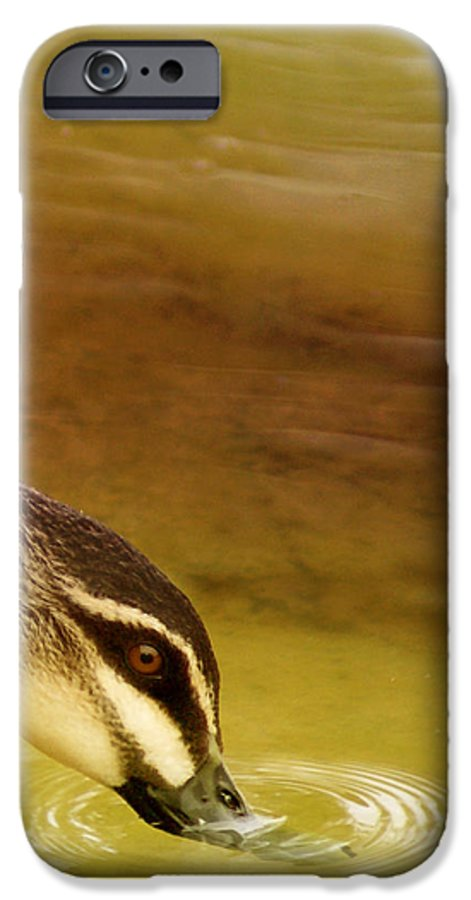 Animals IPhone 6s Case featuring the photograph Ripples by Holly Kempe