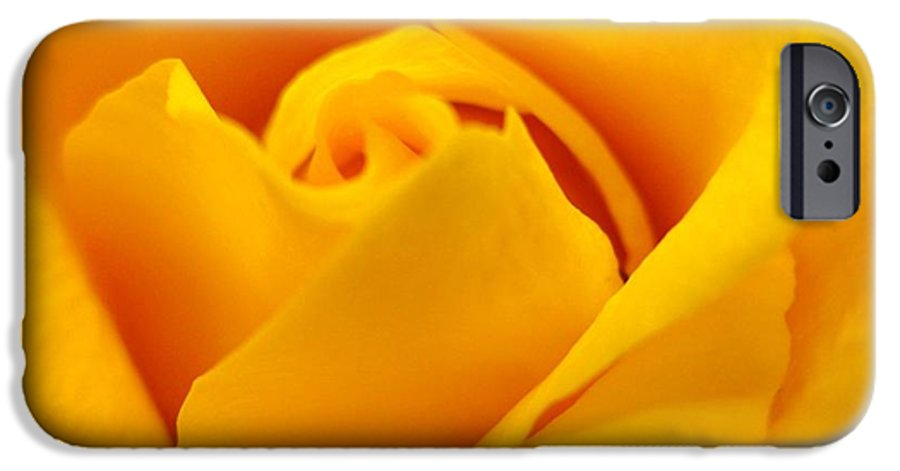 Rose IPhone 6s Case featuring the photograph Rose Yellow by Rhonda Barrett