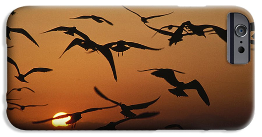 Birds IPhone 6s Case featuring the photograph Seagulls In Sunset by Carl Purcell