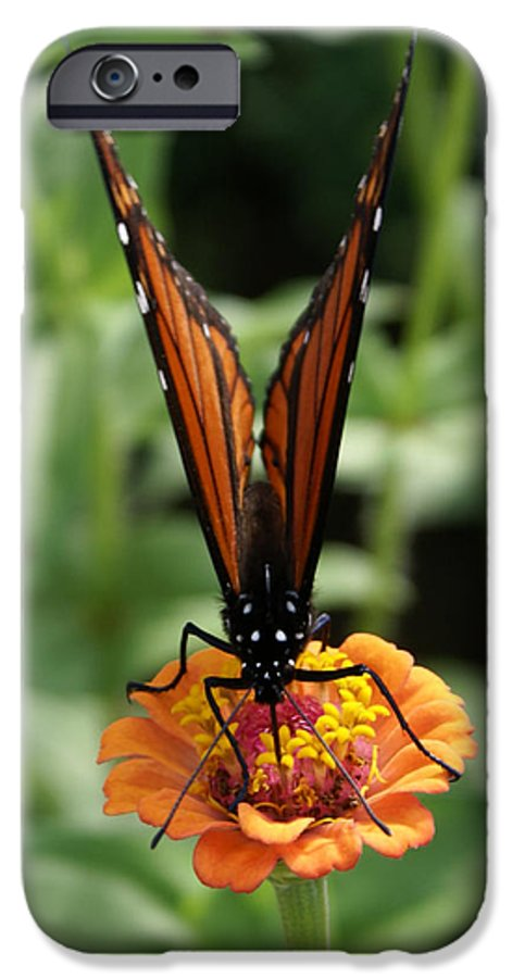 Butterflies IPhone 6s Case featuring the painting Sip Sip Away by Debbie May
