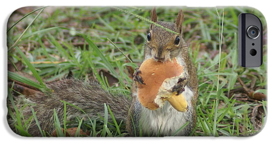 Squirrel IPhone 6s Case featuring the painting Sometimes I Feel Like A Nut by Debbie May