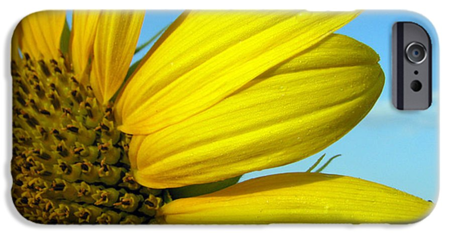 Sunflowers IPhone 6s Case featuring the photograph Sunflower by Amanda Barcon