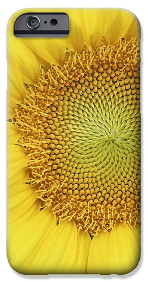 Sunflower IPhone 6s Case featuring the photograph Sunflower by Margie Wildblood