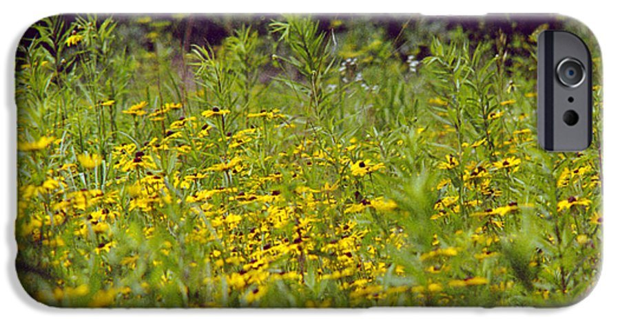 Nature IPhone 6s Case featuring the photograph Susans In A Green Field by Randy Oberg