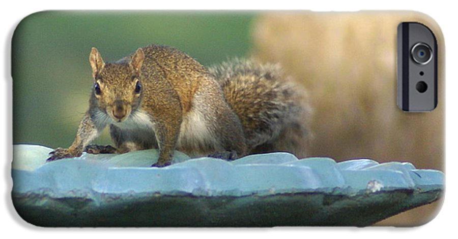 Squirrel IPhone 6s Case featuring the painting Testing The Waters by Debbie May