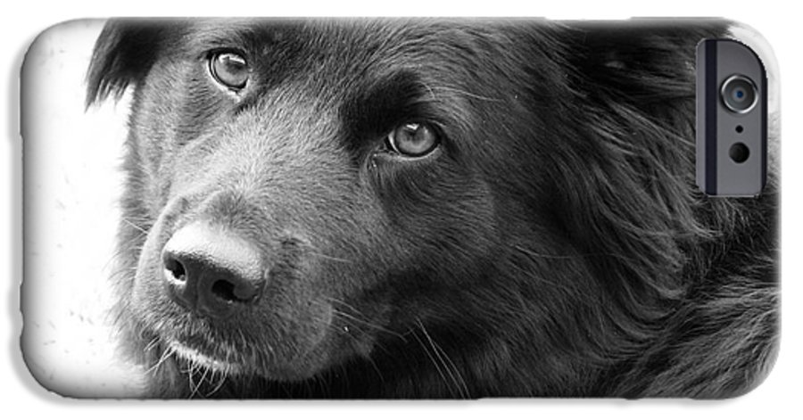 Dog IPhone 6s Case featuring the photograph Thinking by Amanda Barcon