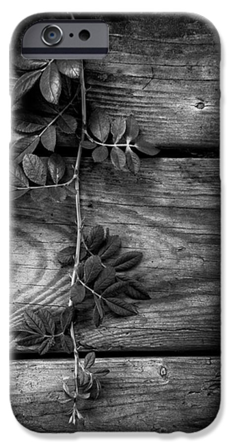 Barn IPhone 6s Case featuring the photograph Vine On Barn by Greg Mimbs