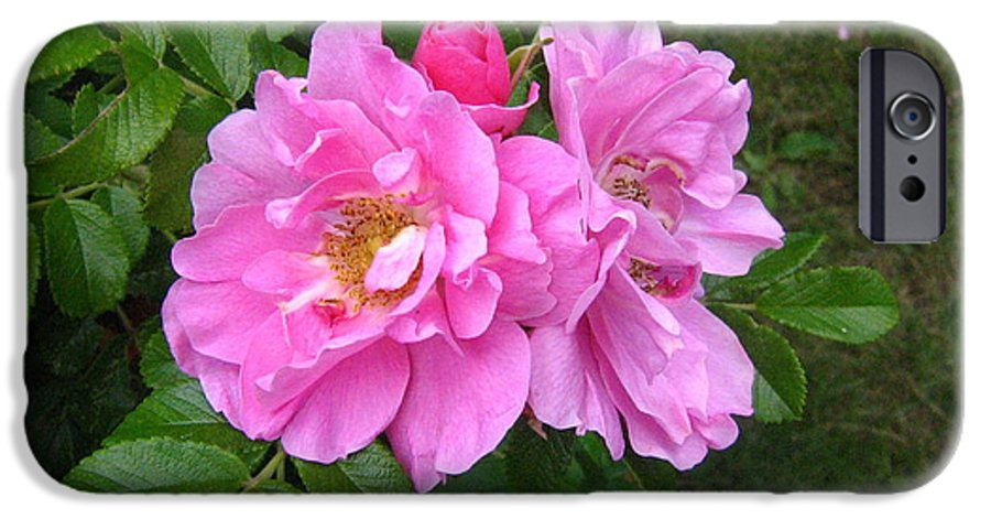Rose IPhone 6s Case featuring the photograph Wild Roses by Melissa Parks
