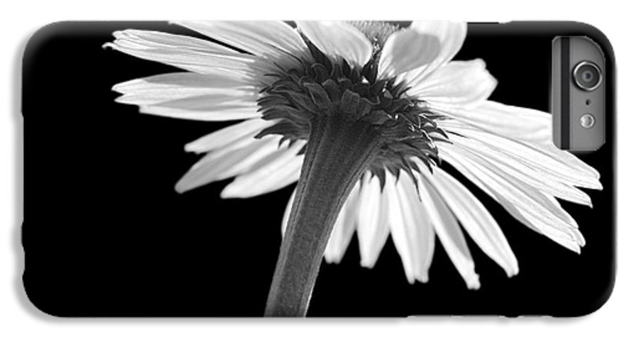 Echinacea IPhone 6s Plus Case featuring the photograph Coneflower by Tony Cordoza