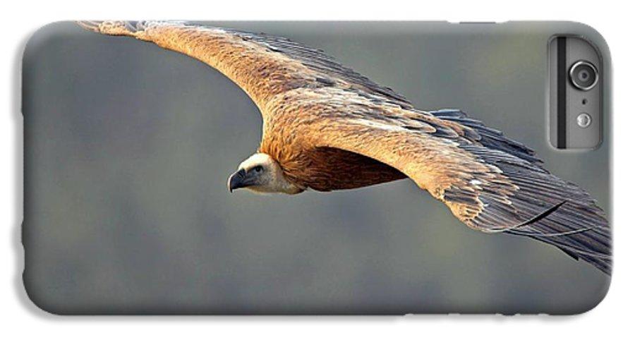 Adult IPhone 6s Plus Case featuring the photograph Griffon Vulture In Flight by Bildagentur-online/mcphoto-schaef