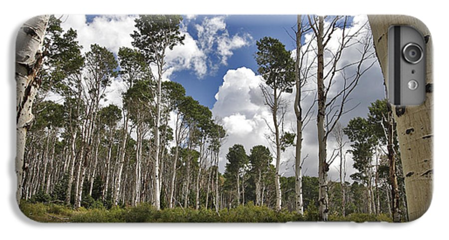3scape IPhone 6s Plus Case featuring the photograph Aspen Grove by Adam Romanowicz