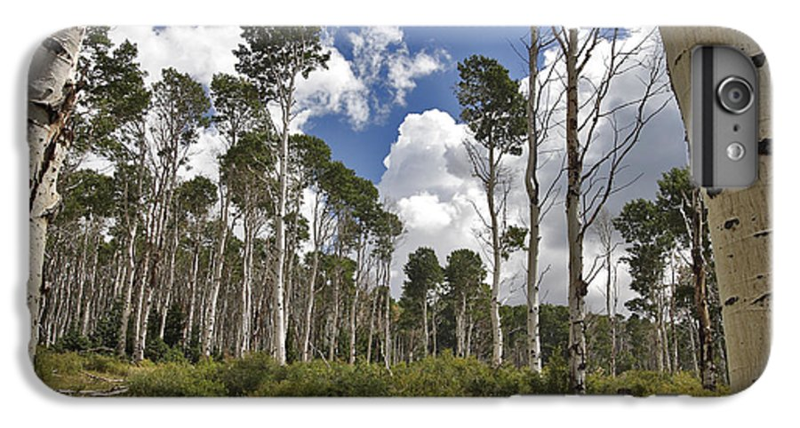3scape Photos IPhone 6s Plus Case featuring the photograph Aspen Grove by Adam Romanowicz