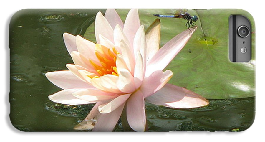 Dragon Fly IPhone 6s Plus Case featuring the photograph Dragonfly Landing by Amanda Barcon