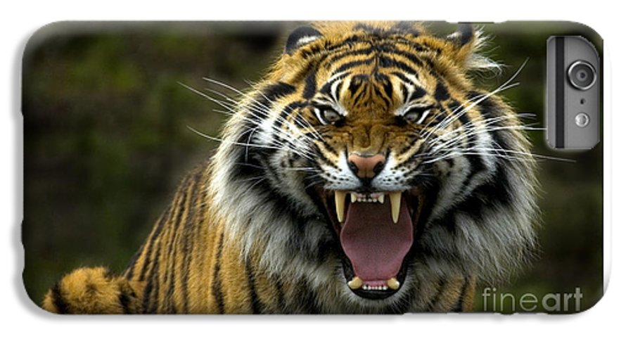 Tiger IPhone 6s Plus Case featuring the photograph Eyes Of The Tiger by Mike Dawson