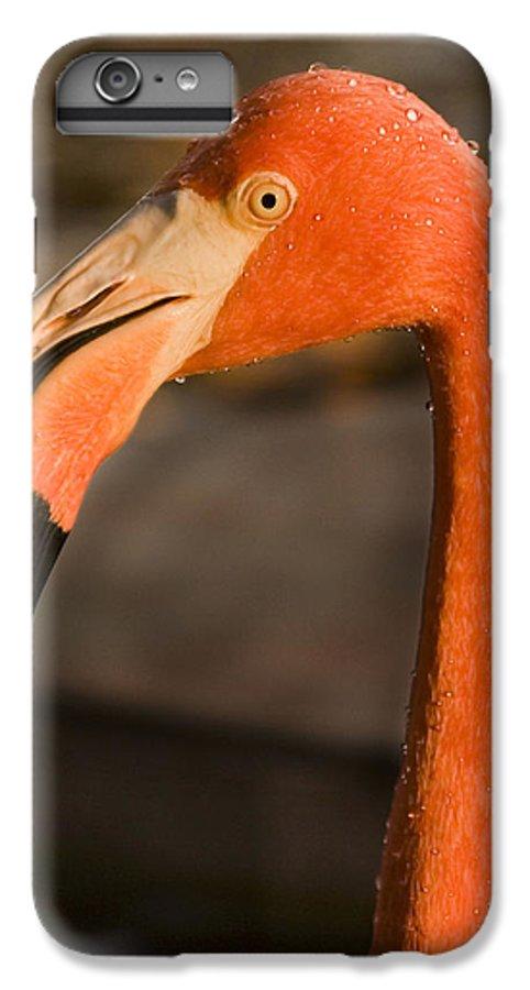 3scape IPhone 6s Plus Case featuring the photograph Flamingo by Adam Romanowicz