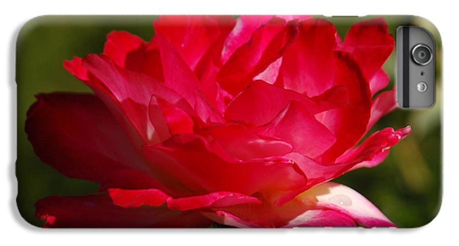 Floral IPhone 6s Plus Case featuring the photograph Fuchsia by Suzanne Gaff