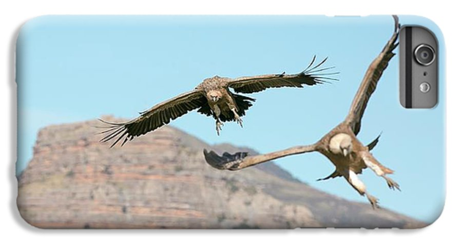 Griffon Vulture IPhone 6s Plus Case featuring the photograph Griffon Vultures Flying by Nicolas Reusens