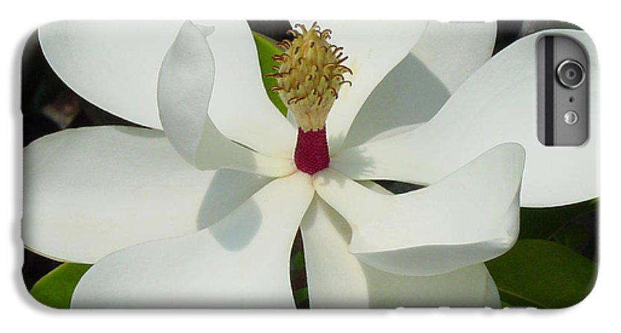 Magnolia Grandiflora IPhone 6s Plus Case featuring the photograph Magnolia II by Suzanne Gaff