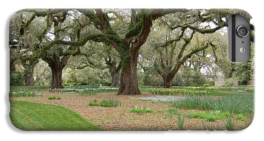 Live Oak IPhone 6s Plus Case featuring the photograph Majestic Live Oaks In Spring by Suzanne Gaff