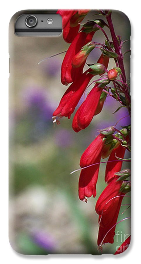 Flowers IPhone 6s Plus Case featuring the photograph Penstemon by Kathy McClure