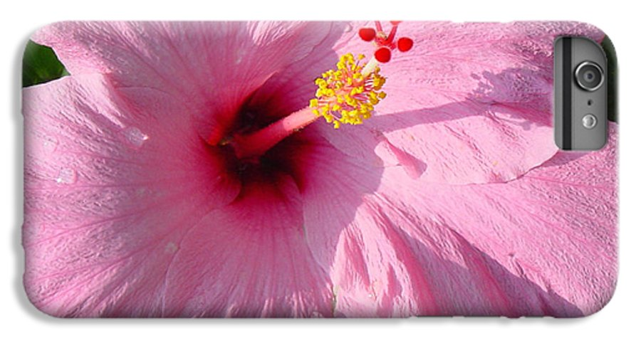 Pink Hibiscus IPhone 6s Plus Case featuring the photograph Pink Hibiscus by Suzanne Gaff