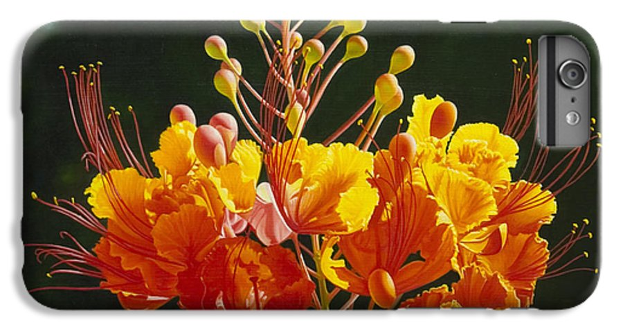 Floral IPhone 6s Plus Case featuring the painting Pride Of Barbados by Gary Hernandez