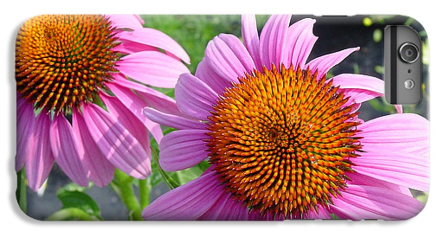 Flower IPhone 6s Plus Case featuring the photograph Purple Coneflowers by Suzanne Gaff
