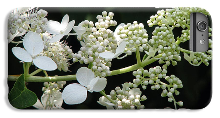 Hydrangea IPhone 6s Plus Case featuring the photograph Simply by Amanda Barcon