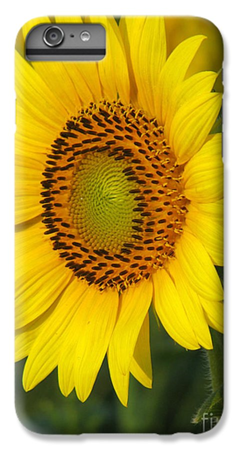 Sunflowers IPhone 6s Plus Case featuring the photograph Sunflower by Amanda Barcon